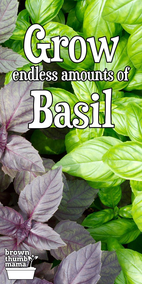 Grow An Endless Supply Of Basil From One Plant Herb Garden Design Container Gardening Vegetables Growing Vegetables