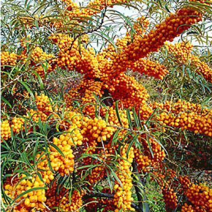 154 besten obstgarten bilder auf pinterest | obstgarten, schnitt, Gartengestaltung