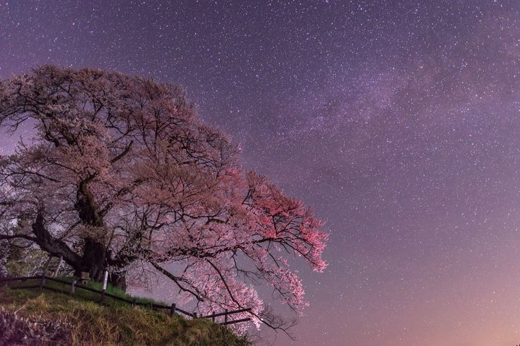 "https://flic.kr/p/GoRFDF | The spring night (ILCE-7M2 + SIGMA 24-35mm f2.0 lens) | Japan is spring now. I did taken cherry blossoms and night sky. But this lens is not not suitable. Because ""Coma"". However, This lens has really sharp and better detail depiction."