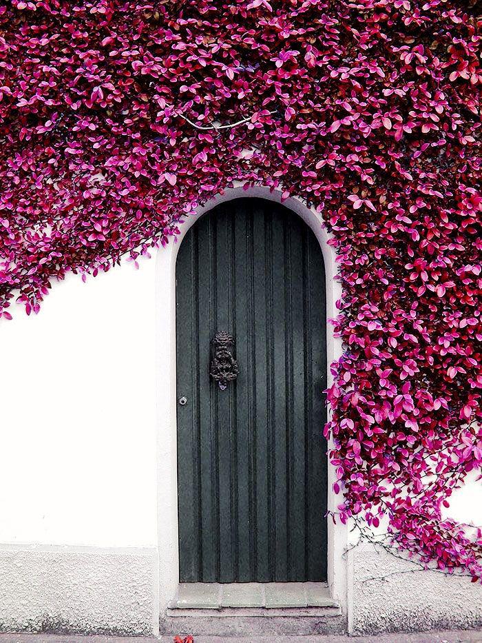 Black door surrounded by purple flowering ivy
