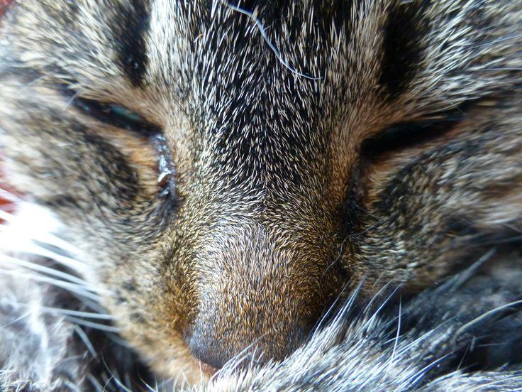 Dag 5 - ogen. De slaperige ogen van de oude poes die mijn duffe dag weerspiegelen