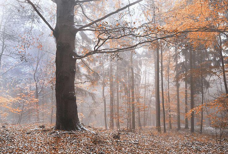 Best 25+ Misty forest ideas on Pinterest