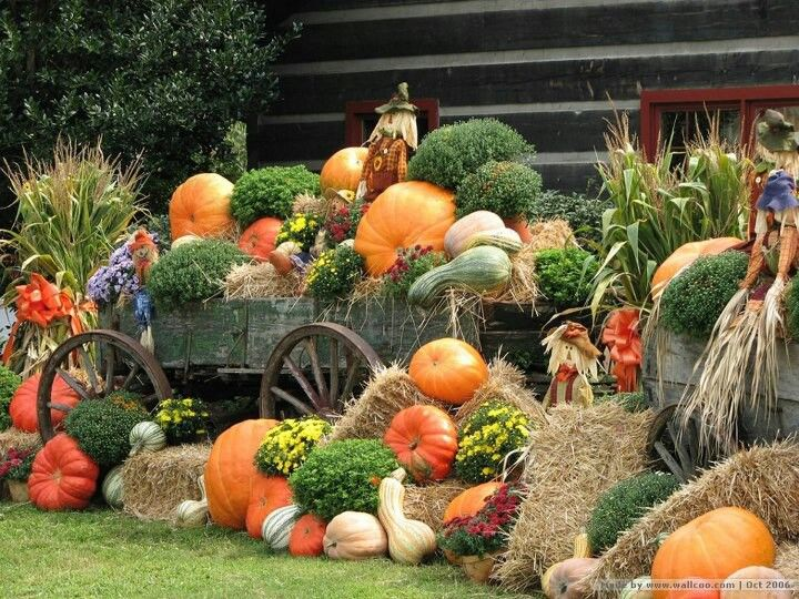 Wow! What a statement! A couple old wooden wagons filled to overflowing with pumpkins, mums, hay bales, gourds, squash, corn stalks and scarecrows. I love that it is in front of an old cabin and that the fall decor spills out over the lawn.