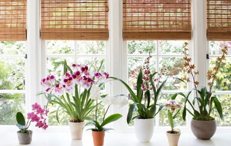 Nem muszáj áttetsző műanyag cserépbe ültetned az orchidea Phalaenopsis-t!