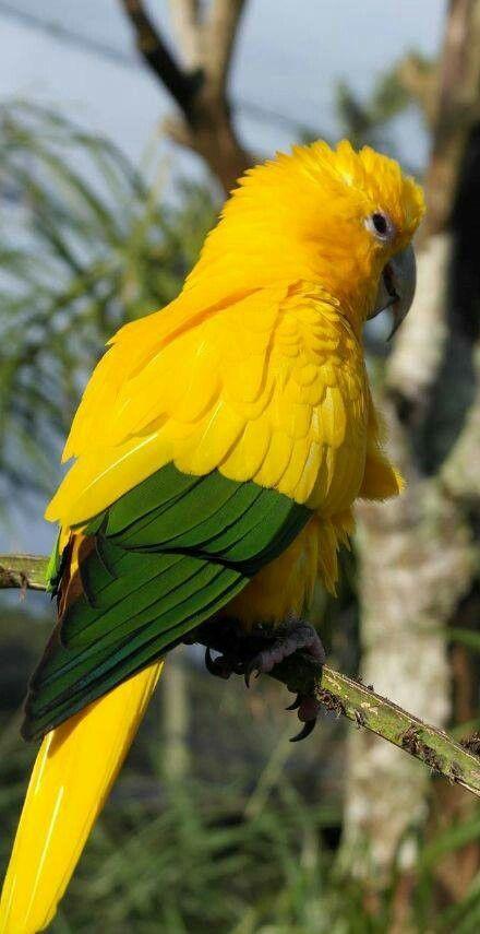 Un periquito con alegre colorido