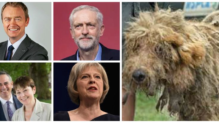 """Parties: Put """"Ban The Sale Of Pups in Pet Shops and By Third-Parties"""" In Your Manifestos! https://www.change.org/p/parties-put-ban-the-sale-of-pups-in-pet-shops-and-by-third-parties-in-your-manifestos?utm_campaign=crowdfire&utm_content=crowdfire&utm_medium=social&utm_source=pinterest"""