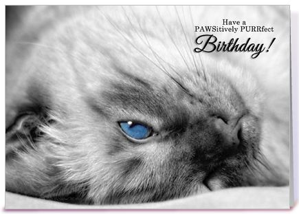 Image result for happy birthday cats images