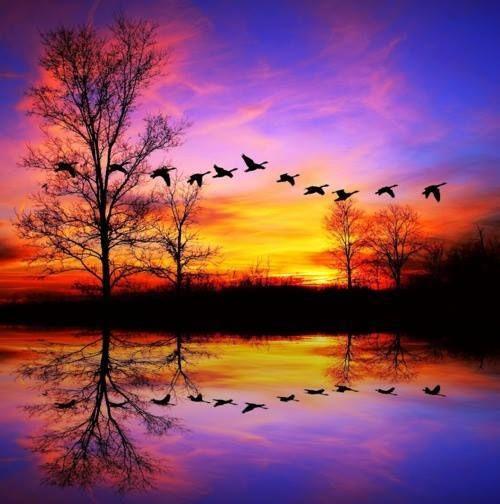 60 imágenes de naturaleza asombrosa