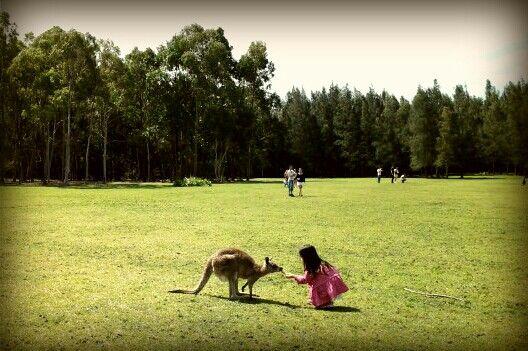 #kangaroo