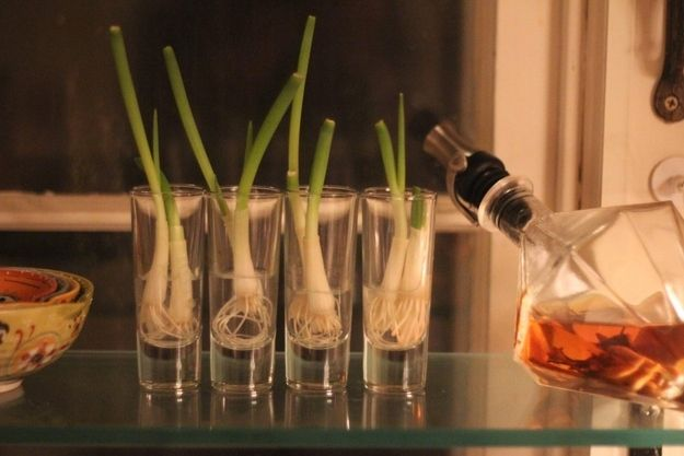 You can grow scallions from their discarded roots. | 13 Vegetables That Magically Regrow Themselves