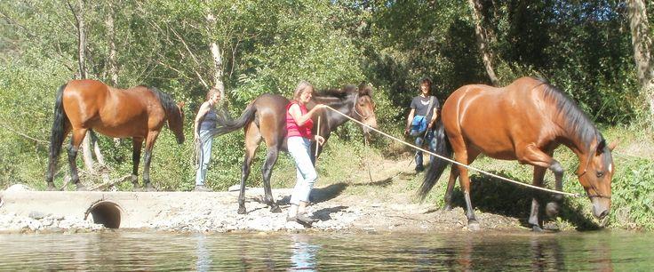 Binnenkort op Coupony: Natural Horsemanship training / vakantie week in Zuid-Frankrijk, met 3 dagdelen privé-training door Monica Goold . Bij Coupony met 37% korting vanaf € 295 p.p.!