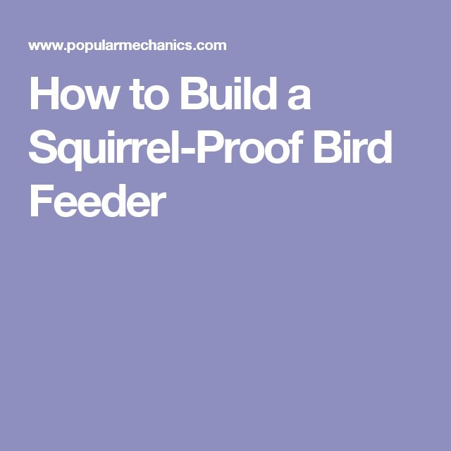 1000 ideas about squirrel proof bird feeders on pinterest for How to build a bird stand