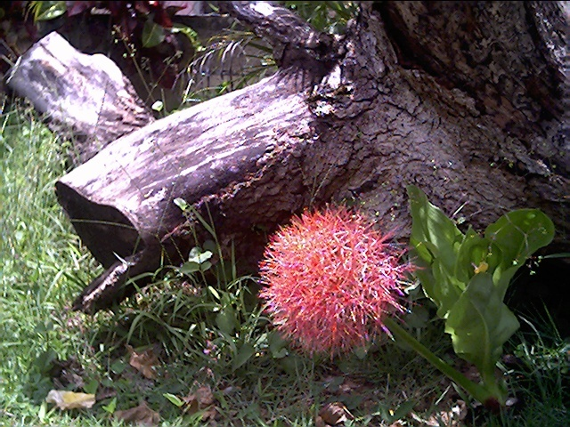 Extraña flor de la que no se el nombre.