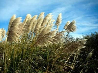 List Of Full Sun Noninvasive Dwarf Ornamental Grass