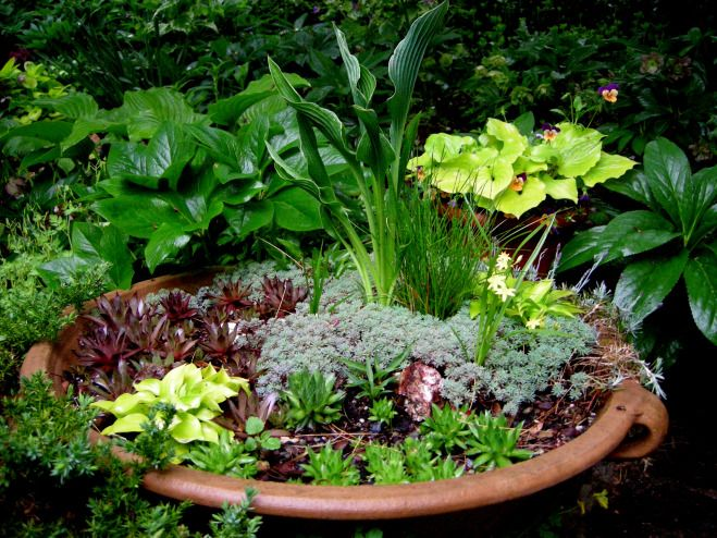 1000 images about Dish Gardens on Pinterest Gardens Succulents