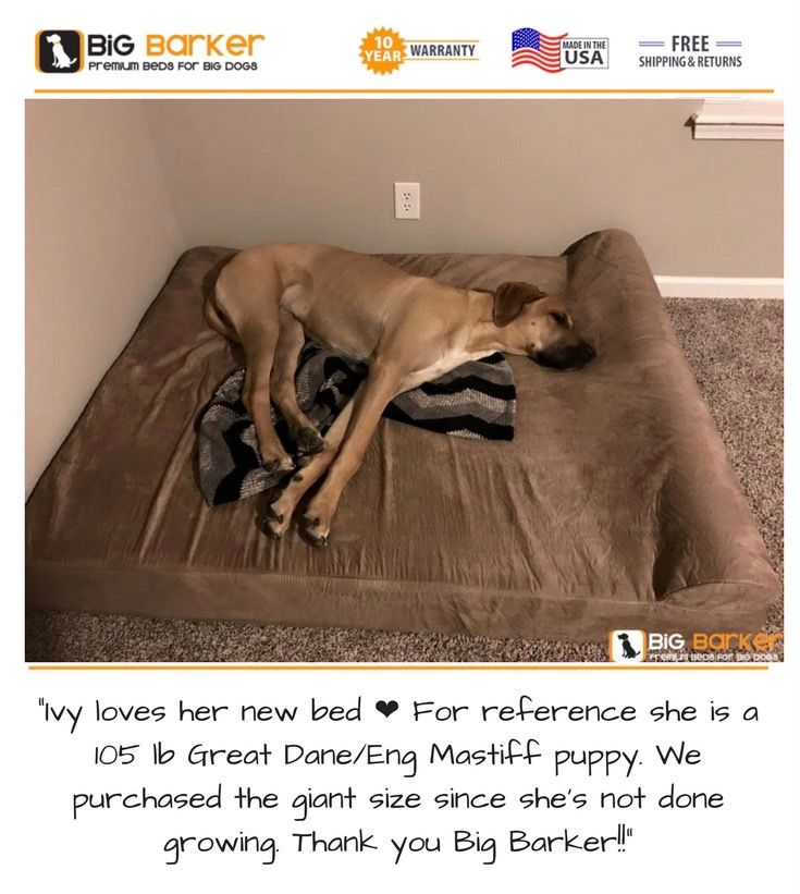 "Customer photo. To get this bed, https://bigbarker.com  ""Ivy loves her new bed ❤ For reference she is a 105 lb Great Dane/Eng Mastiff puppy. We purchased the giant size since she's not done growing. Thank you Big Barker!!""  #englishmastiff #greatdane #americanmadedogbeds #dogbedlargebreed #dogbedlivingroom #dogbedluxury"