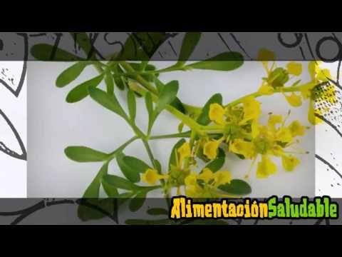 PARA QUE SIRVE EL TE DE RUDA  PARA QUE SIRVE EL TE DE RUDA SUSCRIBETE AQUI https://www.youtube.com/channel/UCA9QeZOFSMbnMFOUybmfBfw?sub_confirmation=1 Hola y bienvenido a un nuevo video Para que sirve el té de ruda La ruda es originaria de la península balcánica en el sureste de Europa hoy en día crece en todo el mundo debido a sus propiedades medicinales tiene un inconfundible Aroma que a muchos gusta y a otros no. Una de las mejores formas que podemos aprovechar las propiedades de la ruda…