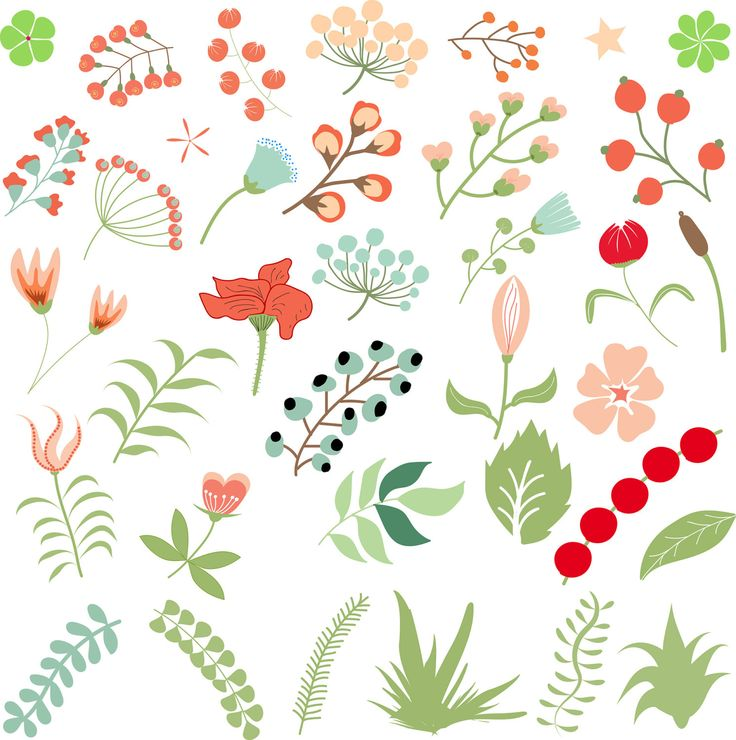 Flower clipart by Orangepencil on Etsy