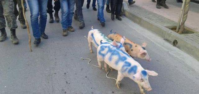 Έγραψαν στα γουρούνια… ΣΥΡΙΖΑ και τα έβγαλαν βόλτα