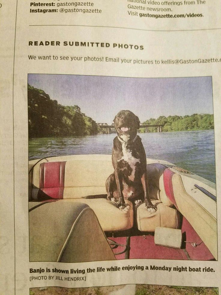 Banjo made the Gaston Gazette.  We hope his ego doesn't get too big.