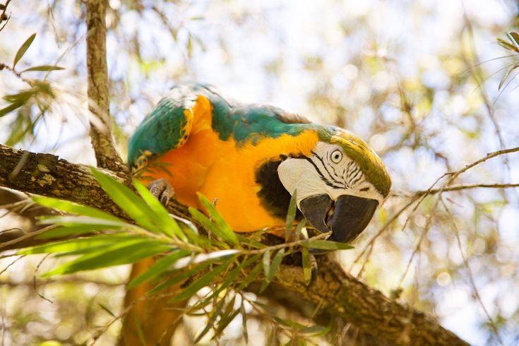 Bird Gardens of Naples (Napels, FL) - Beoordelingen