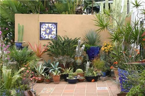 This colorful courtyard garden shows that you needn't use a lot of water to get a lot of color. Beautiful use of tile, colored pots, and succulents. Design by Bishop Garden Design in San Diego, CA. Click through for more ideas on using succulents in the landscape.