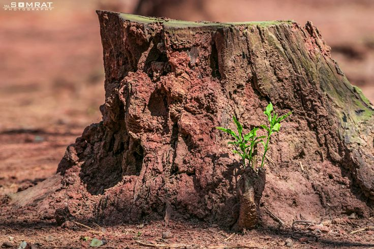 Let It Grow!  মানুষ তার নিজের প্রয়োজনে গাছ কাটে, কিন্তু অনেক মানুষই গাছ লাগায় না। কিন্তু প্রকৃতি তার নিজের প্রয়োজনে বেড়ে উঠে। তাদের বেড়ে উঠতে দিন।  People cut trees for their own needs, but many people do not plant trees. But nature can grow to its own needs. Let them grow.  #MiSomrat #Photography Location: Mirpur, Dhaka, Bangladesh.