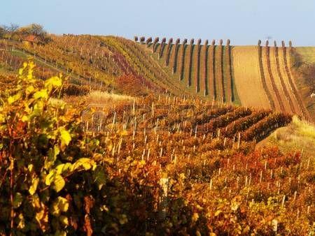 South Moravia Autumn