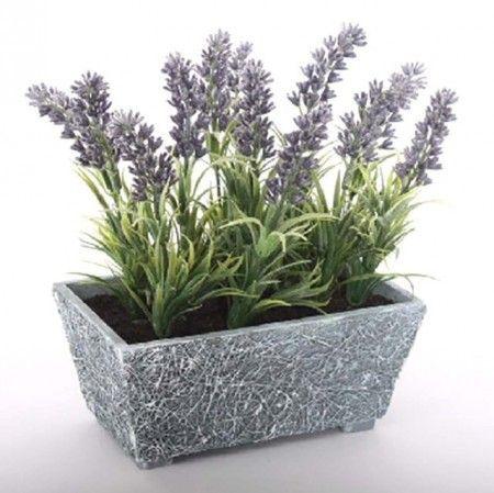 plantas para la protección