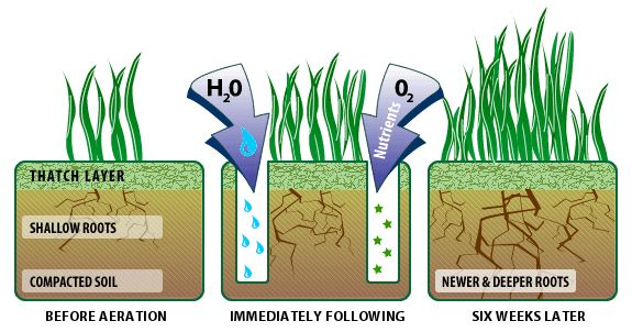 Find out how lawn aeration relieves a compacted lawn, and can bring fantastic benefits to the health and quality of your grass.