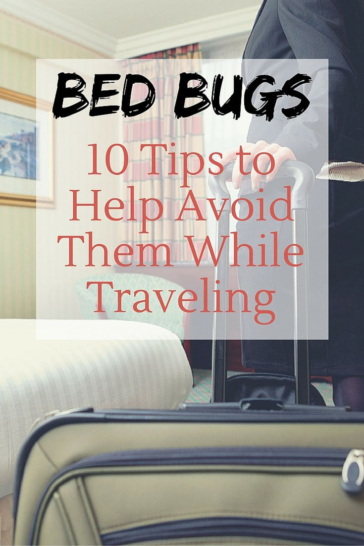129 best bed bugs images on pinterest bed bugs bugs and insects