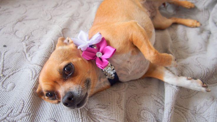 Ribbon flower wedding dog corral. www.svatbyodvery.cz