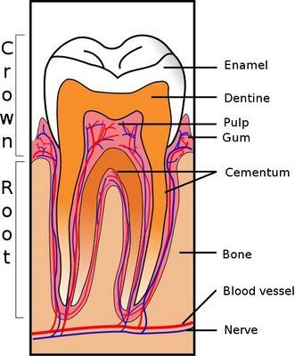 Super article on Dental Health and diet and supplements to keep teeth strong...why, and how, and even info on healing cavities.