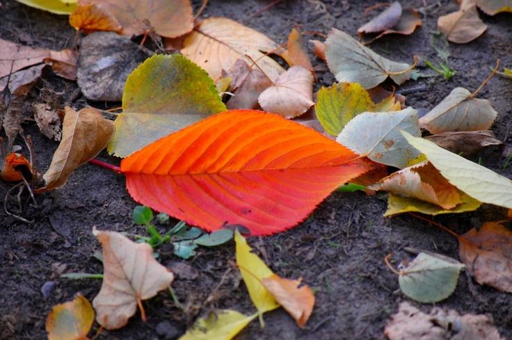 Fotógaléria: olvasóink őszi természetfotói / Éva Magazin