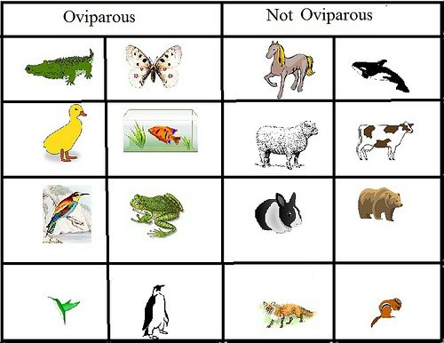 42 best Oviparous Animals images on Pinterest | Spring, Crafts to ...