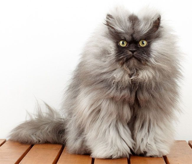 Best Colonel Meow You Are Missed We Love You RIP And God - Garfi is officially the worlds angriest cat