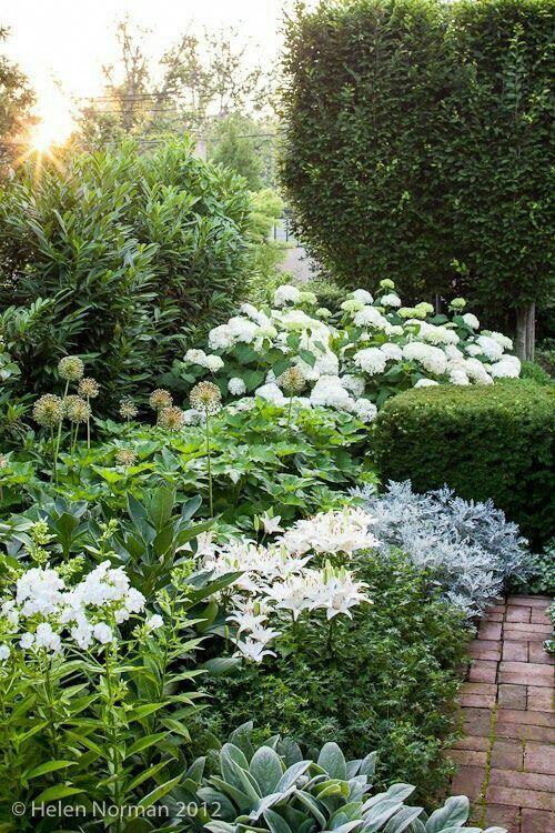 White Garden Landscaping : Best green white landscaping images on pinterest