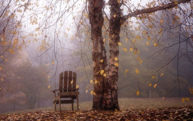 46 Free Fall Wallpapers and Backgrounds: Autumn Leaves Falling Over Chair by WallpaperStock