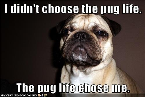: Life Check, Funny Pics, Pug-Dog, Pug Life, Pugs Obsession, Funny Dogs Pictures, Pugs Life, Creatures Captions, Pugs Care