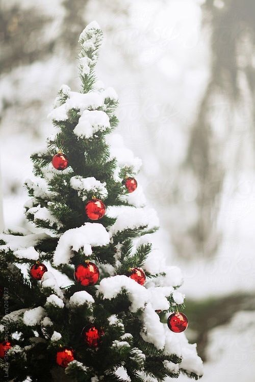 dreamsofchristmas:  wintersnowland:  ❄️⛄️  Christmas Blog! All Year! 365 Days! New posts every 3 minutes!