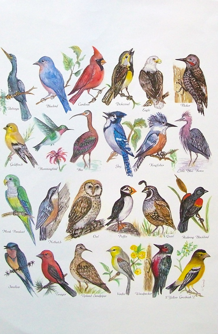 "Wild bird alphabet 11 x 14""  watercolor print available for $30 matted and free shipping"