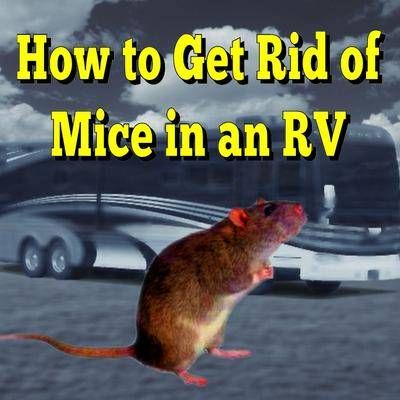 how to get rid of mice in furniture