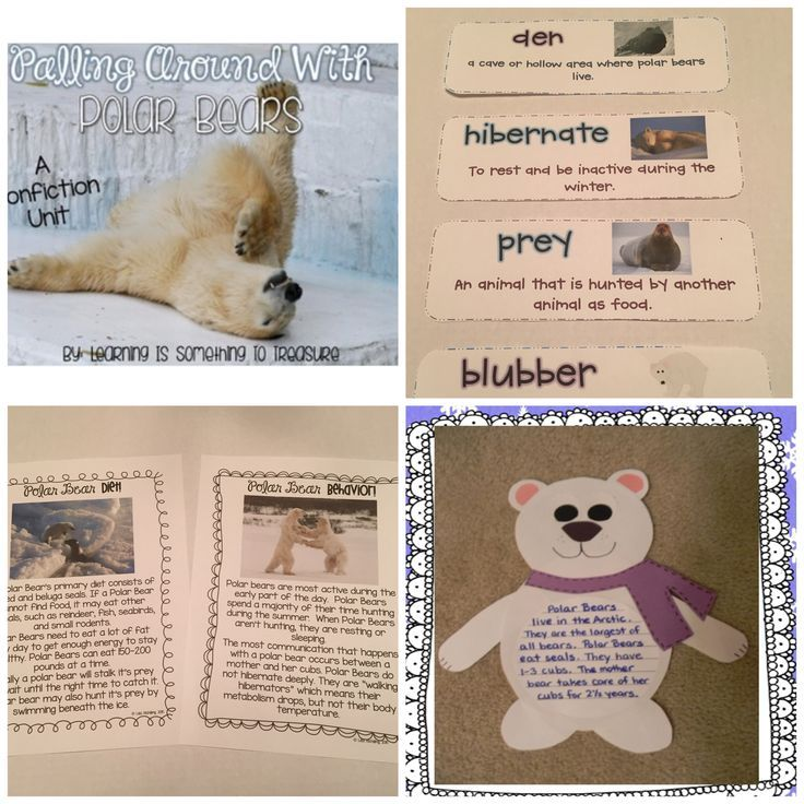 This non-fiction polar bear unit is sure to grab and keep your students' attention! This unit is jam-packed with information polar bears including general facts, diet, habitat, cubs, adaptations, characteristics, and threats. Available as a bundle with pe