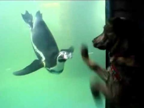 Puppy Penguin Poom