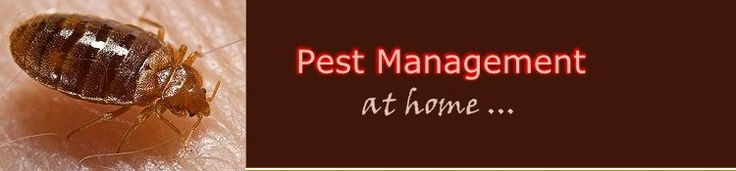 pest management at home
