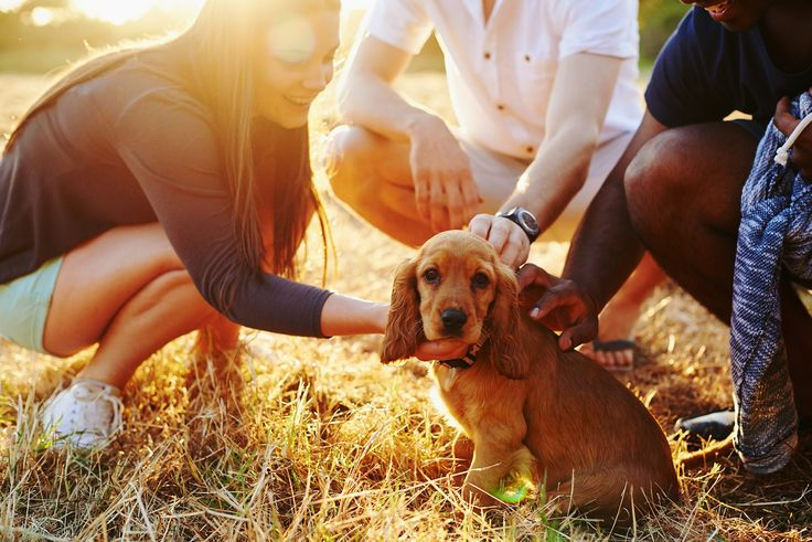 Good Dog! The Importance of Puppy Socialization Classes | New Haven Pet Hospital Blog