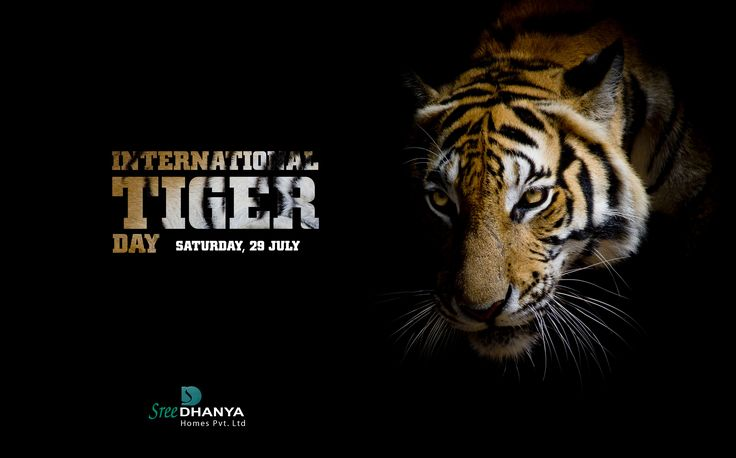 Tiger is a Symbol of Beauty, Bravery, Strength & Nationality. So Save the Tiger 🐅, Save the Nation Pride👇 #InternationalTigerDay2017