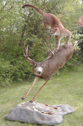 What are different types of taxidermy wall mounts?