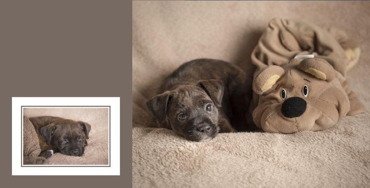 Ritratti di famiglia non solo per neonati! Ma questa volta anche per un piccolo cucciolo in cerca di casa!  Milano, Monza, Brianza, questa volta Siamobimbi pelosi !