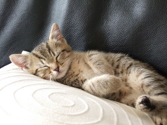 Sleeping kittens; does life get much better than this?